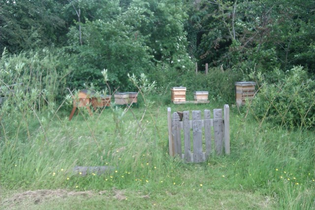 Sutton Lane apiary