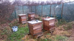 Fags Road hives