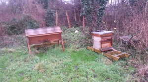 Sutten lane hives