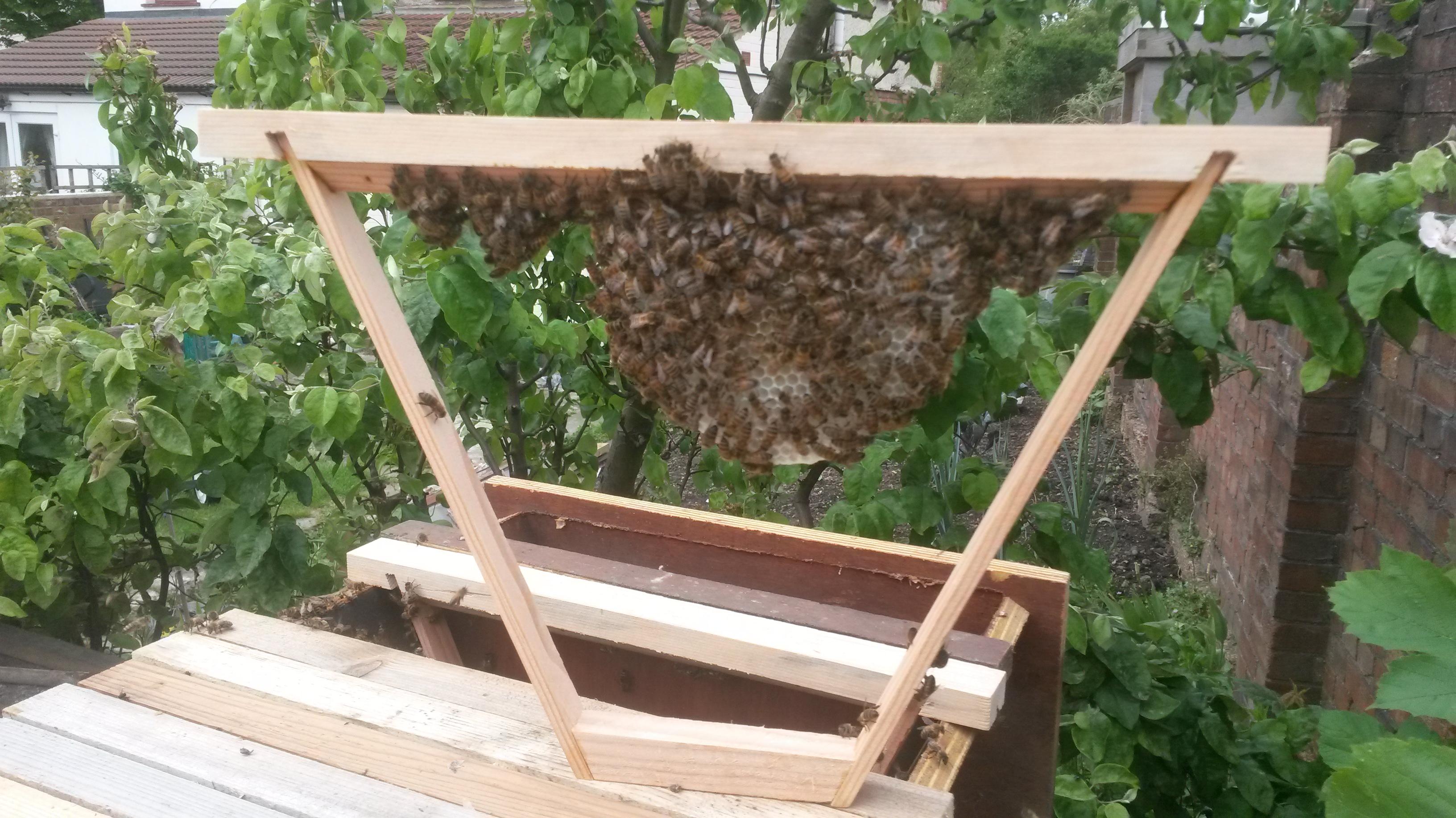 Top Bar Hive frames | Beekeeping afloat